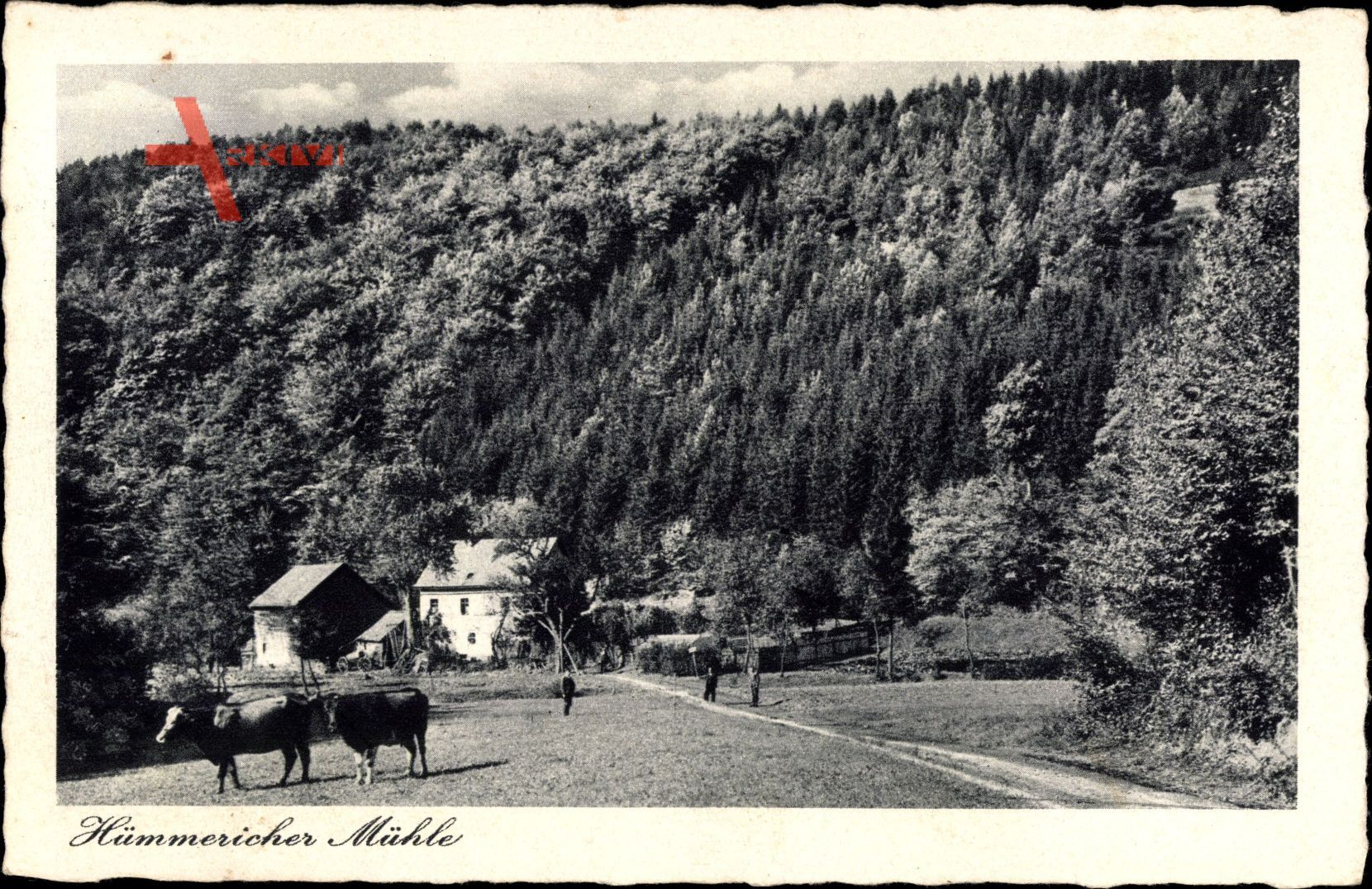 Hümmerich Landkreis Neuwied, Blick auf die Hümmericher Mühle, Rinder