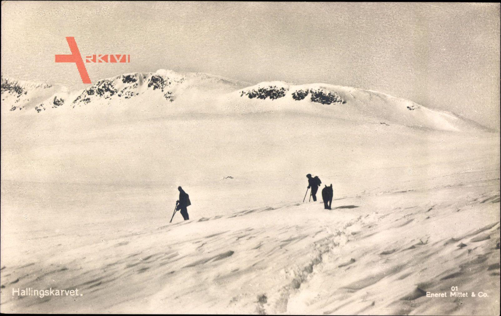 Norwegen, Hallingskarvet, Skifahrer, Winterlandschaft, Hund, Schneedecke