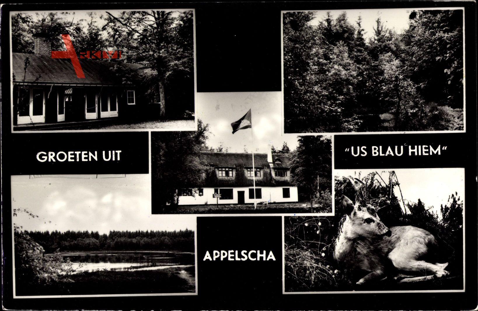 Appelscha Friesland Niederlande, Us Blau Hiem, Jeugdherberg Kamphuis, Reh