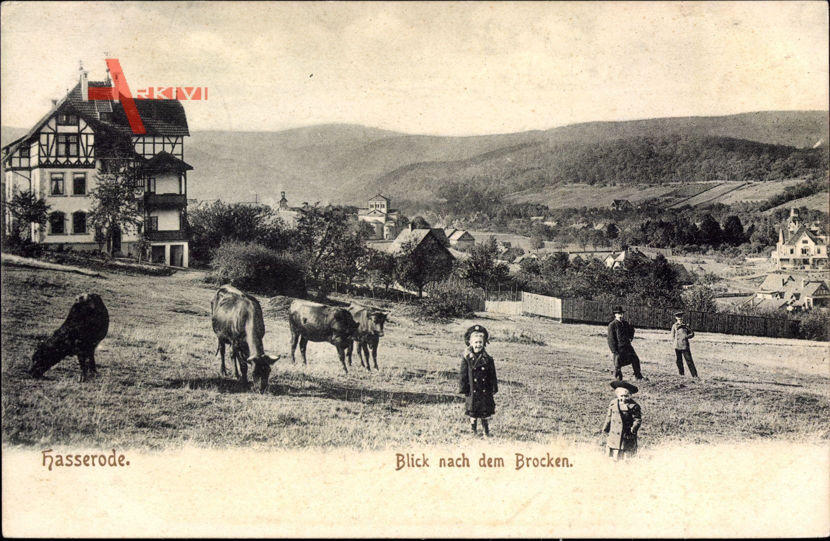 Hasserode Wernigerode am Harz, Rinder auf der Weide, Kinder, Häuser