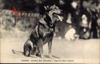 Paris, Jardin des Plantes, Type de Chien Policier, Polizeihund