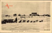 Aux Glaces Polaires, le charriage du bois de chauffage, Schlittenhunde