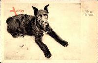 Un peu de repos, Terrier, Schwarzes Fell, Im Sand liegend, Hund