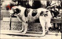 Chien des Pyrénées, Hund steht aus einer Sitzbank