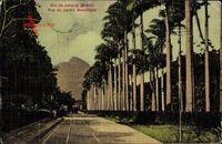 Rio de Janeiro Brasilien, Rue du Jardin Botanique, Straßenpartie, Garten