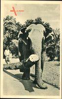 Indien, Elefant der einen Baumstamm zieht, Palme, Einheimische