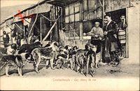 Konstantinopel Istanbul Türkei, Les chiens de rue, Straßenhhunde, Fütterung