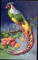 Carlo, Paradiesvogel, Fasan auf einem Ast sitzend, Bunte Federn