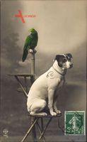 Terrier und ein Papagei, Portrait, Vogelbaum, Hund