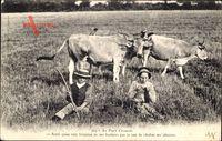 Au Pays Creusois, Kuhherde beim Grasen, Kinder im Gras sitzend