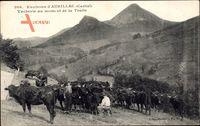 Environs dAurillac Cantal, Vacherie au monent de la Traite, Kühe