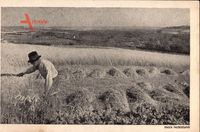 Niederlande, Mooi Nederland, Landwirt bei der Feldarbeit, Strohernte