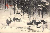 Hirsche im bayrischen Hochgebirge, Winter, Futterstelle