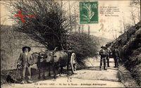 En Auvergne, Sur la Route, Attelage Auvergnat, Ochsenkarren, Holztransport
