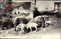 Un repas de Cochons, Schweinefamilie auf dem Bauernhof