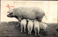 Nos Campagnes, Une heurese petite famille, Schweinefamilie, Ferkel