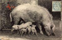 Intéressante Famille, Schweinefamilie, Ferkel mit Mutter