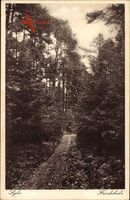Syke Niedersachsen, Partie im Friedeholz, Wald, Weg, Vegetation